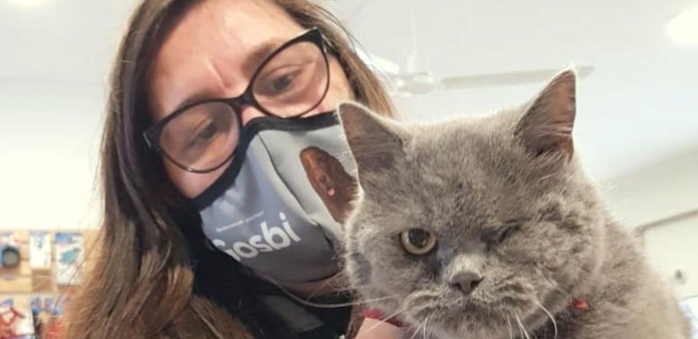 Gatos SCOTTISH no Banho e Tosquia da PETFIXE